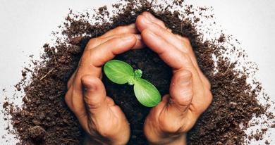 VEGAN – Genuss rein pflanzlich